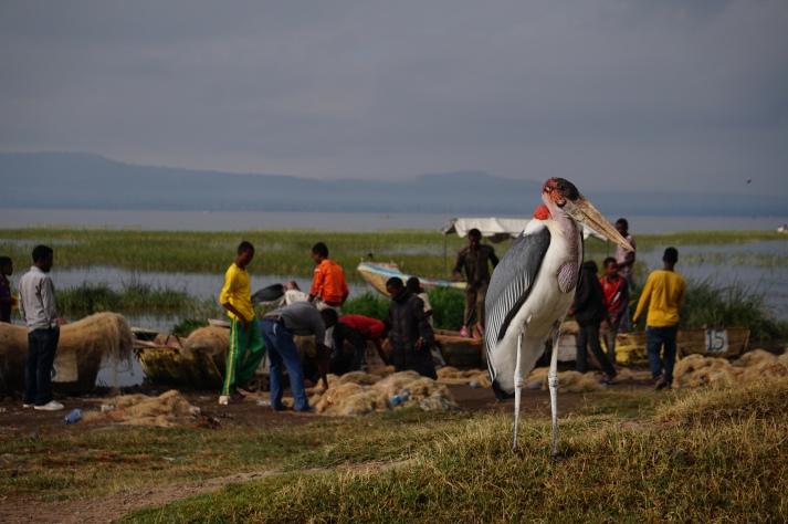 Der Fischmarkt von Awassa