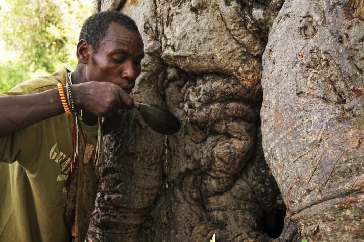 Baobabs als Wasserspender