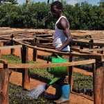 Emma Kawanguzi, Gärtner aus Uganda